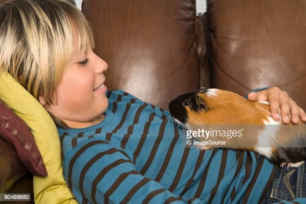 boy and guinea pig - guinea pig stock pictures, royalty-free photos & images