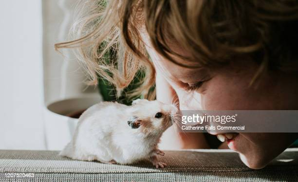 boy and hamster - pets stock pictures, royalty-free photos & images
