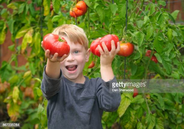 boy and heirloom tomatoes - portland, oregon - dan sherwood photography stock pictures, royalty-free photos & images