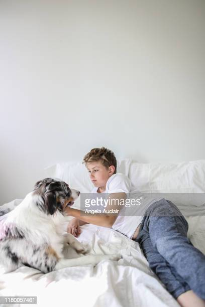 a boy and his australian shepherd relaxing in a bedroom - angela auclair stock photos and pictures