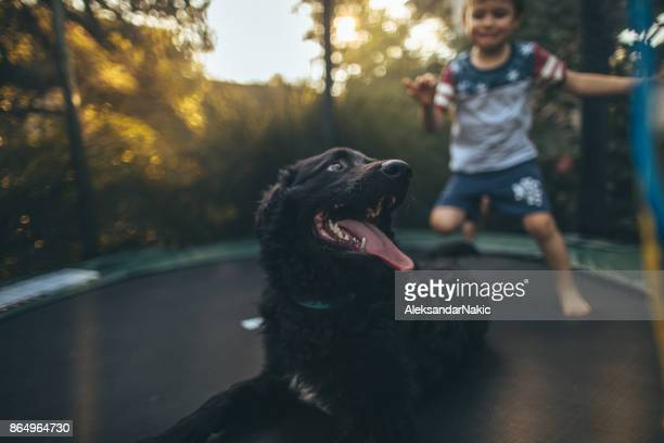 Boy and his dog jumping on a trampoline