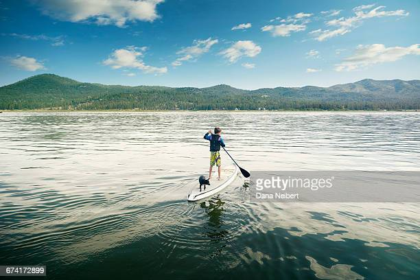 a boy and his dog paddle boarding. - big bear lake stock pictures, royalty-free photos & images