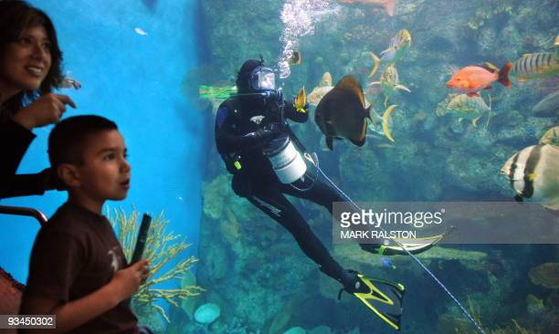 A boy and his mother watch as a diver feeds tropical fish in the Tropical Pacific Gallery at the Aquarium of the Pacific in Los Angeles on November...