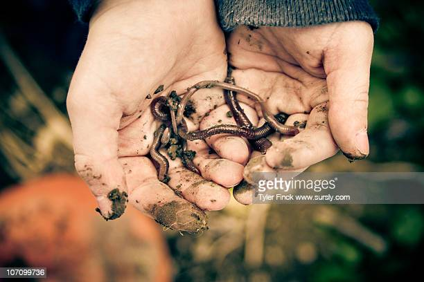a boy and his worms - sursly stock pictures, royalty-free photos & images