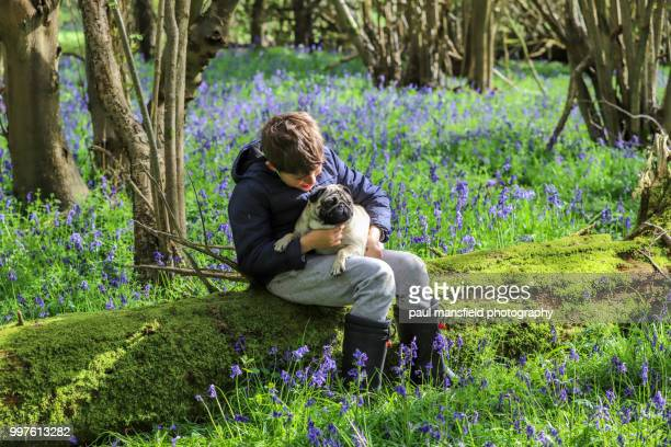 Boy and pug in bluebell wood