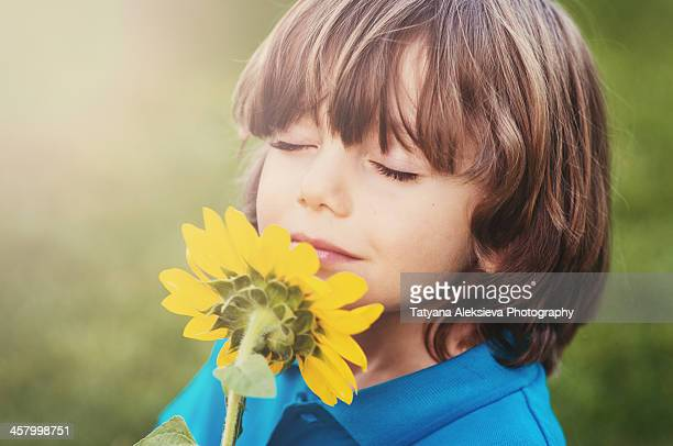 boy and sunflower - long stem flowers stock pictures, royalty-free photos & images