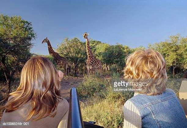 Boy (8-9) and teenage girl (13-14) in off-road vehicle, watching giraffe in bush