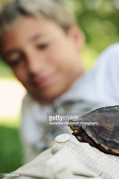 boy and turtle - box turtle stock photos and pictures
