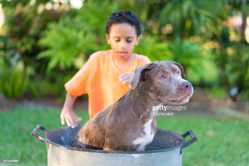 Boy bathing his dog : Stock Photo