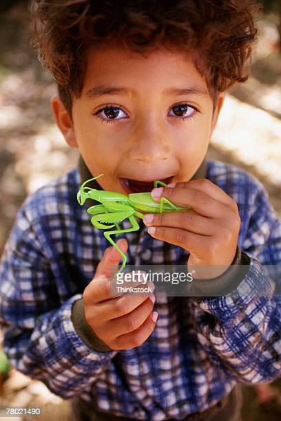 Boy biting toy praying mantis