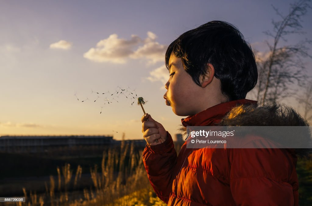Boy blowing a dandelion head : Stock Photo