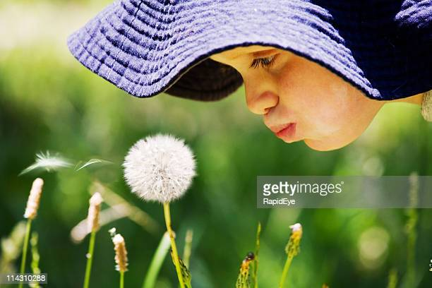 boy blowing dandelion - flaccid stock photos and pictures