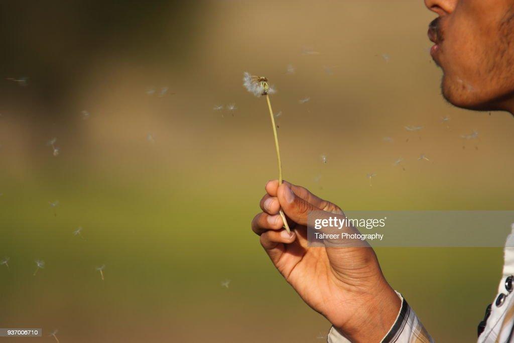 A boy blowing dandelion : Stock Photo