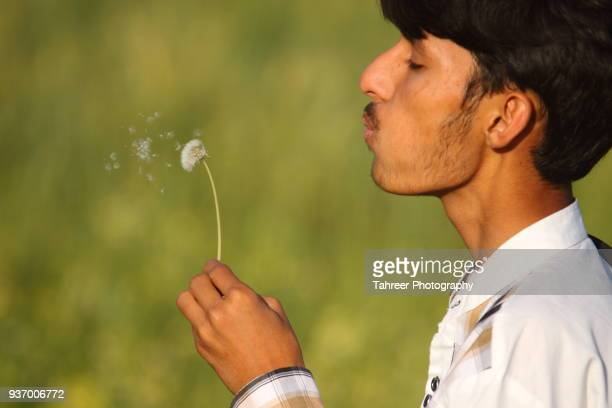 a boy blowing dandelion - cute pakistani boys stock photos and pictures