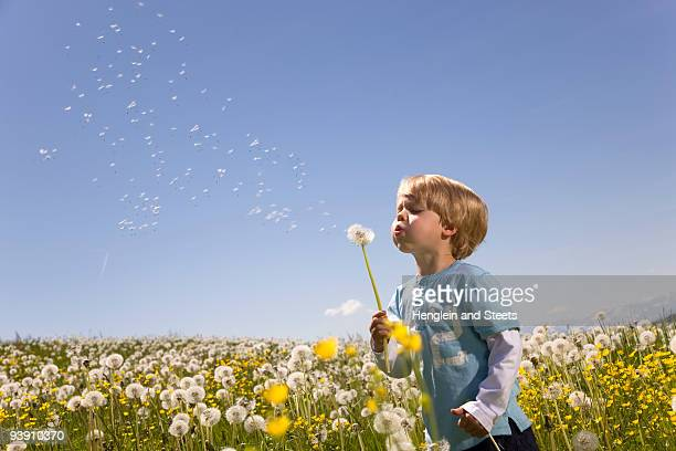 boy blowing dandelion seeds