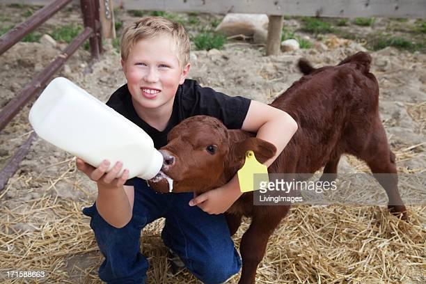 Boy Bottle Feeding a Calf
