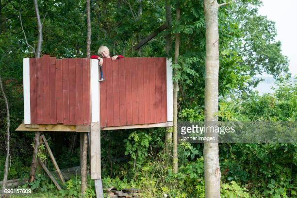 Boy building tree house