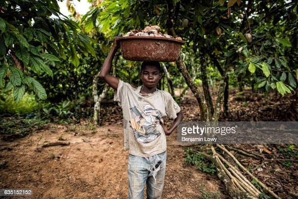 A young boy perhaps 10 years ago carries a basket filled with the 'meaty' seeds of a cocoa plant in small secluded farming commune near Abengourou...