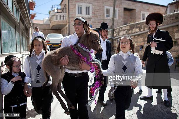 A boy carries a donkey as Ultra Orthodox Jews take part in the 'Pidyon Peter Chamor' ceremony or the 'Redemption of the first born donkey' in the...