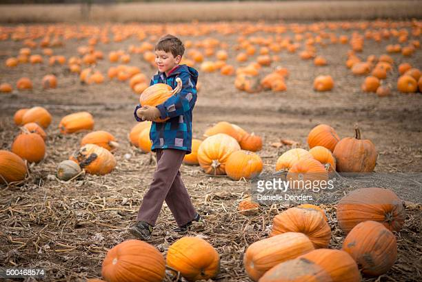 """boy carrying a pumpkin at a pumpkin patch - """"danielle donders"""" stock pictures, royalty-free photos & images"""