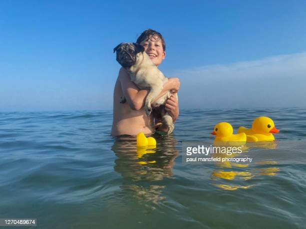 "boy carrying his pet pug in the sea with rubber ducks nearby - ""paul mansfield photography"" stock pictures, royalty-free photos & images"