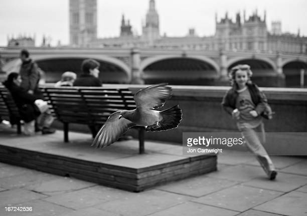 CONTENT] A boy chases a pigeon on the South Bank opposite the Houses of Parliament London
