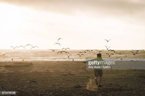 boy chasing away birds on beach - amy chase stock pictures, royalty-free photos & images