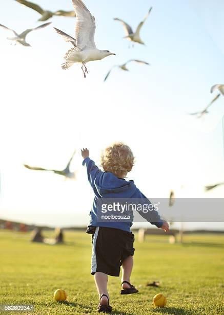 Boy chasing seagulls