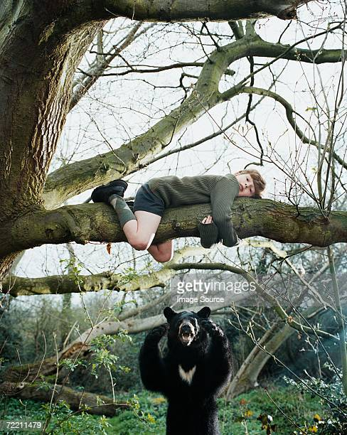 boy climbing a tree to escape bear - animals attacking stock pictures, royalty-free photos & images