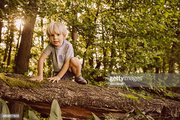 Boy climbing along fallen tree in forest