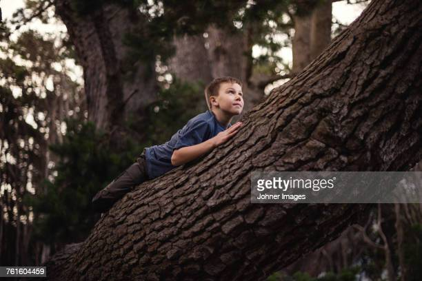 boy climbing tree - one boy only stock pictures, royalty-free photos & images