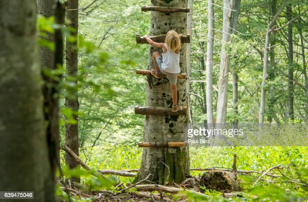 Boy climbing up steps on tree, Calimani Mountains, Eastern Carpathians, Romania