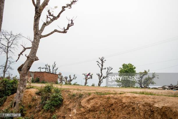 A boy climbs a tree in Bandipur Nepal on March 30 2019