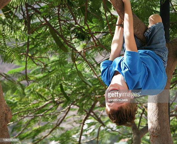 Boy clinging to fir tree branch and smiling