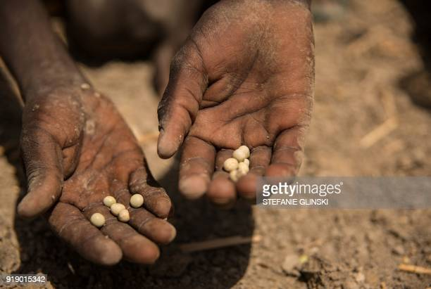 A boy collects peas on the ground after a food distribution at the Protection of Civilian site in Bentiu South Sudan on February 13 2018 Bentiu's...