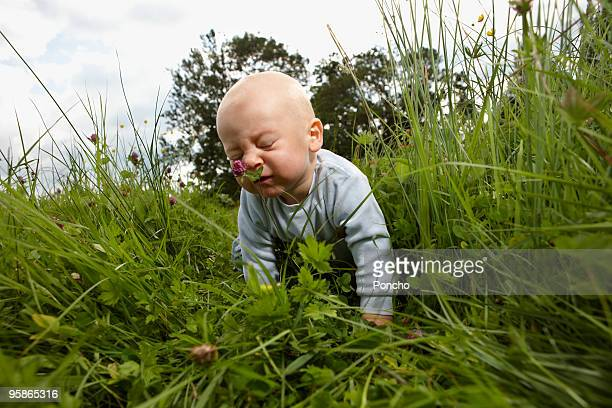 boy crawling in high grass smelling at flower