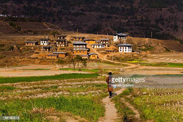 Boy crossing rice fields to Sopsokha village