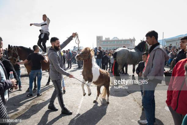 A boy dances on top of his horse during Horse Easter celebrations while a man encourages his miniature horse to rear up in the Fakulteta neighborhood...