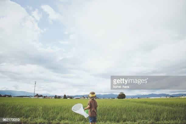 虫をキャッチしている少年 - 夏休み ストックフォトと画像