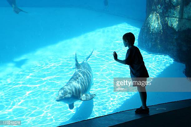 Boy & Dolphin
