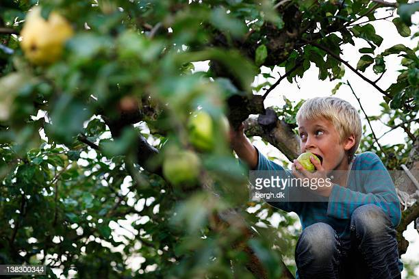 Boy eating in fruit tree