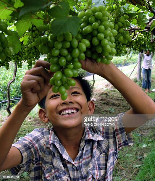 WITH 'LIFESTYLECAMBODIAWINE' A boy enjoys green grapes at a farm of a wine producer Chan Thai Chhoeung in northwestern Battambang province 02 August...