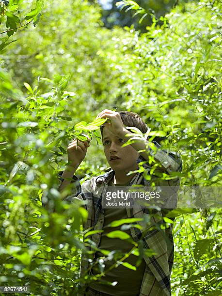 boy examing plants in forest