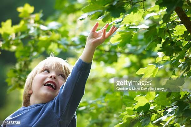 Garçon examiner feuilles en plein air