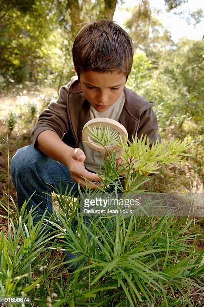 Boy examining plants with a magnifying glass