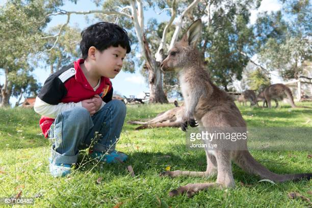 Boy face to face with baby kangaroo