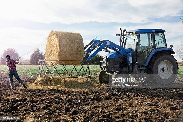 Boy farmer removing netting from hay stack in dairy farm field