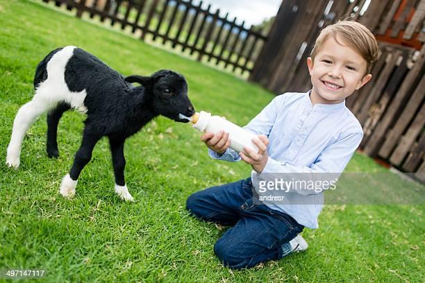 Boy feeding a goat
