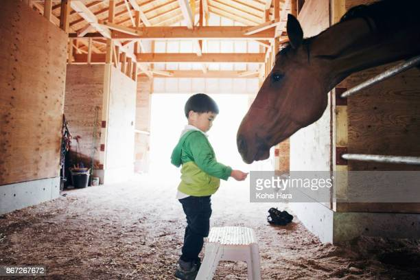 Boy feeding a horse with grass in the horse stable