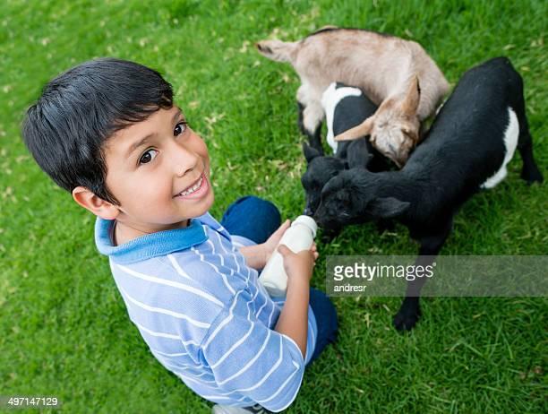 Junge Füttern baby Ziegen